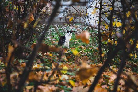Black and white cat seen between vegetation