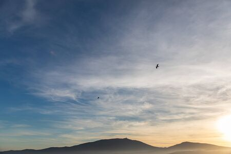 Sunset sky view with a flying seagull and blue and yellow colors in Cap de Creus, Catalunya