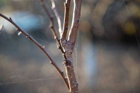 Tree branch closeup with spider web strings