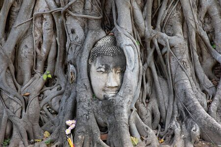 View of the ancient stone Buddha head under tree roots in Ayutthaya Banco de Imagens
