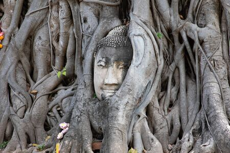 View of the ancient stone Buddha head under tree roots in Ayutthaya Imagens