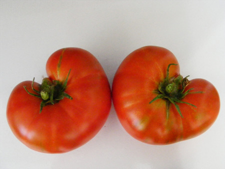 heart-shaped tomatoes-twin brothers were dometes Stock Photo
