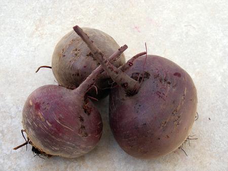 remolacha: planta de remolacha roja