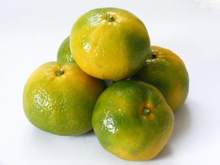 indispensable: indispensable winter tangerine orchard