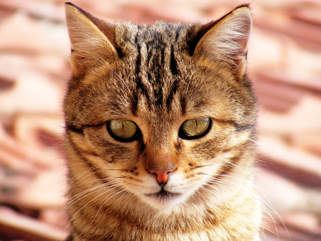 Cat pictures, cat eyes, the most beautiful cat eye photos, cute cat, pets innocent look Stock Photo