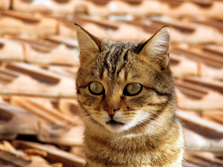 pete: Cat pictures, cat eyes, the most beautiful cat eye photos, cute cat, pets innocent look Stock Photo