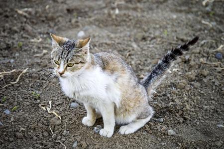pete: that cat poop