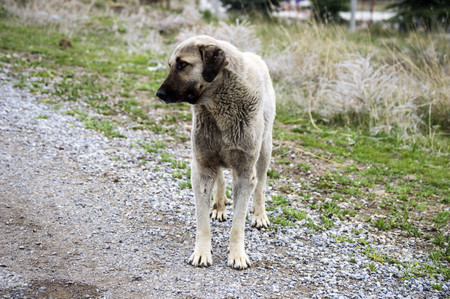Old shepherd dog, tired and exhausted dog pictures 스톡 콘텐츠