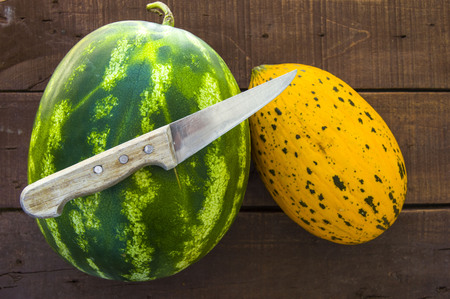 Wonderful melon and watermelon paintings on white background