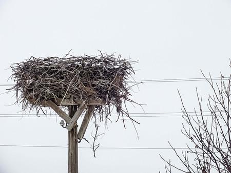 storks migrate in winter, nests stay empty, empty storks nest,