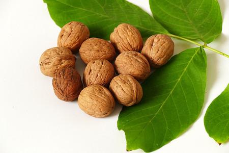 walnut and green walnut leaves