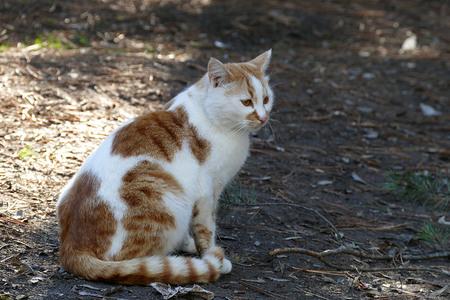 white-yellow cat close-up