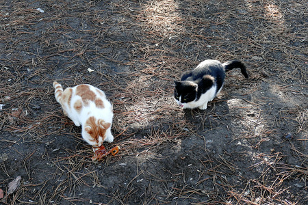 two cats cant share food,