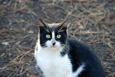 a black and white cat peeking around,