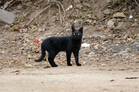 black cat head, close-up black cat head, Banco de Imagens