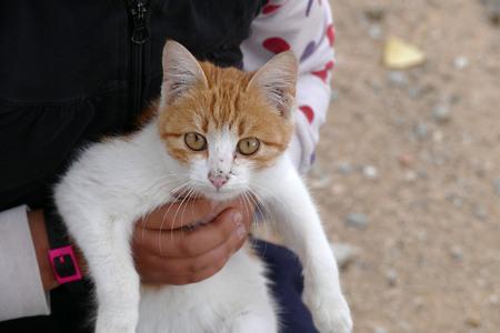 yellow-white stray cat, yellow cat head, close-up