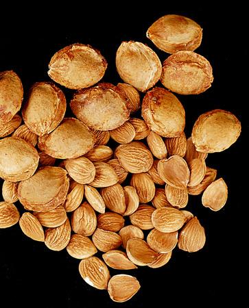 dried apricot kernels