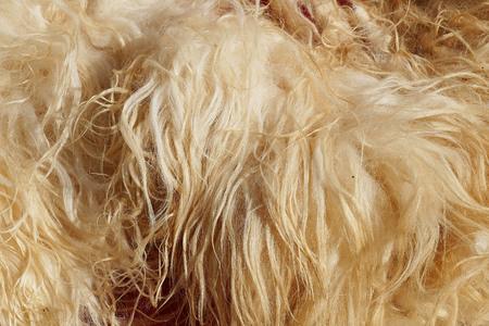 sheep wool Banco de Imagens