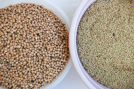 green dry lentils separated for cooking,