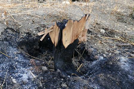 burnt in a tree fire