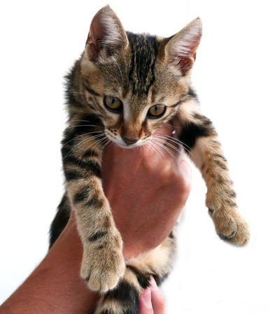 a human is holding the cat with his hand,