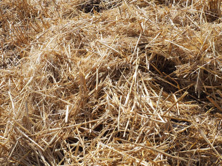 hay in the harvested wheat field, wheat straw and straw in the field, straw in the field,