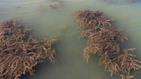 murky lake water dirty, dirty turbid water caused by drought,