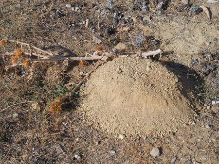 molehill, lump of soil formed by the mole,