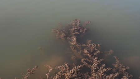 algae that grows in the water, algae,