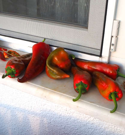Big red peppers left to ripen in front of the windowsill, 版權商用圖片
