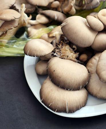 fresh oyster mushroom, oyster mushroom with high nutritional value,