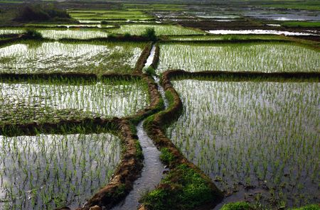 paddy fields with water and irrigation canal