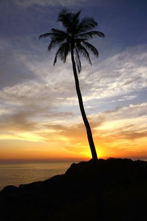 silhouette of coconut palm under dramatic sunset sky photo