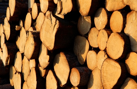 cut trunks of pine tree on stock photo