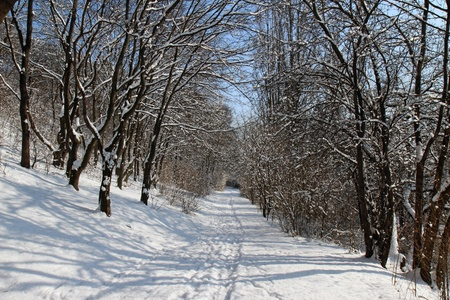 winter road full of snow in sunny day photo
