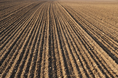 the plough: plough agriculture field before sowing