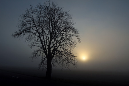 black silhouette of tree in fog