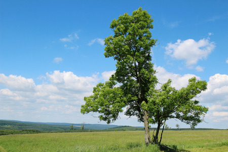 deciduous tree standing in a meadow