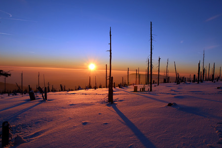 Winter forest destroyed by bark beetles during the sunset Stock Photo