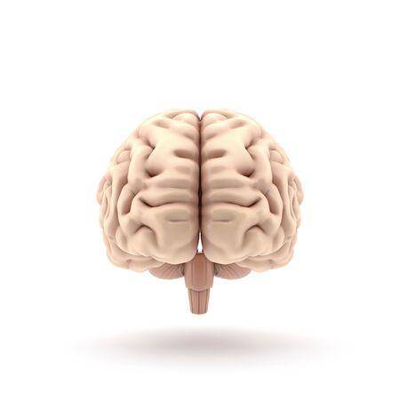 3d human brain front view Reklamní fotografie