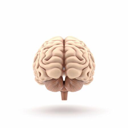 3d human brain rear view Reklamní fotografie
