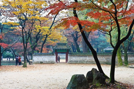 View of garden with autumn foliage in palace