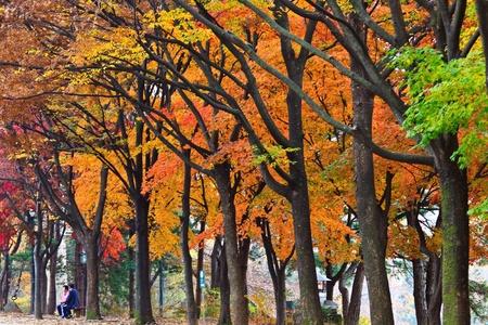 Colorful tree Stock Photo