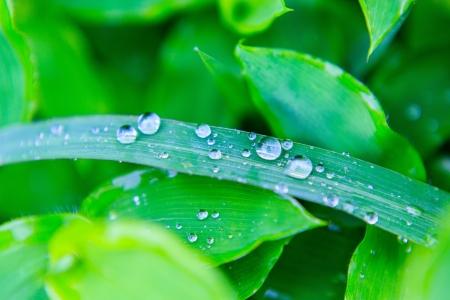 dewdrop: Dewdrop on the leaf Stock Photo