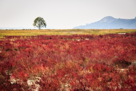 red bush: Red bush and tree