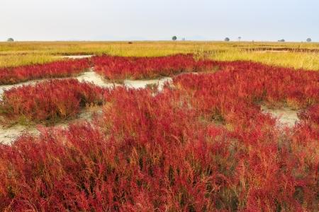 red bush: Red bush on the field