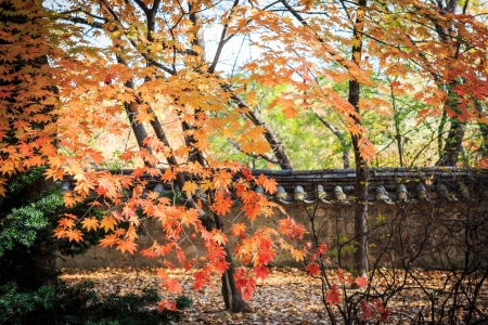 Autumn foliage and wall Stock Photo