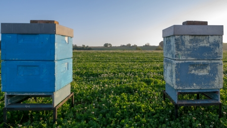 Bee hive for pollination on a clover field Stock Photo