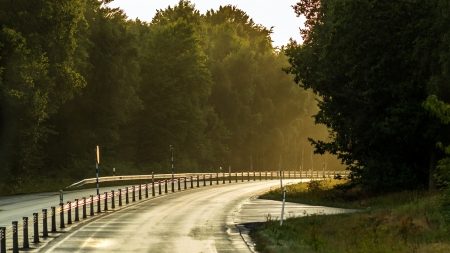 sun lit: Driving alone on a sun lit forest road in Sweden