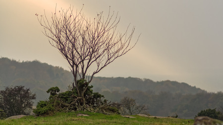 barren: Autumns Barren landscape, a single tree in a ray of light Stock Photo